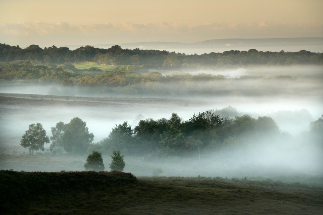 A misty view over the gorgeous New Forest outside of Bournemouth
