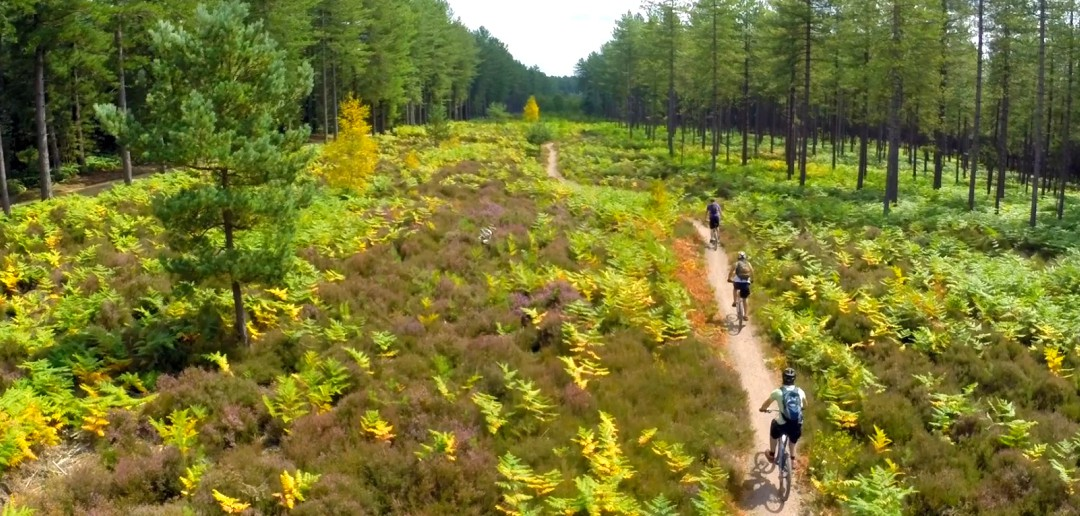 An aerial view of trails through Moors Valley near Bournemouth