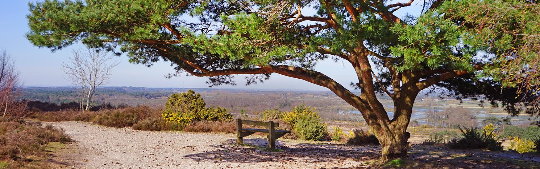 A lonely bench sits under a lush green tree with views of the Christchurch countryside