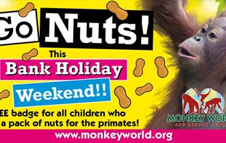 advert for go Nuts at monkey world showing infant orangutan Mimi
