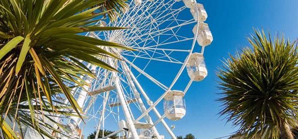 Looking up at the Bournemouth wheel through some palm tree's on a clear sunny day