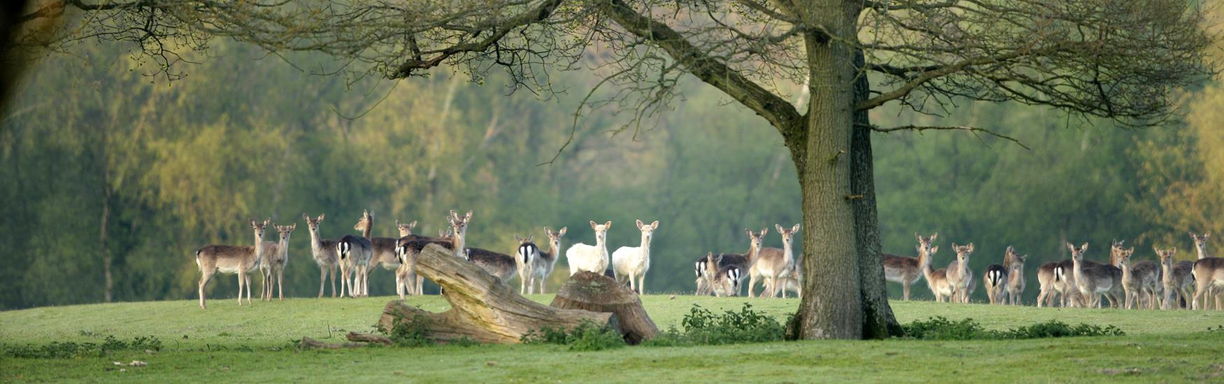 Discover the New Forest © New Forest District Council