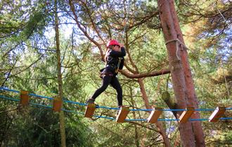 New Forest Activities - Canopy Tour