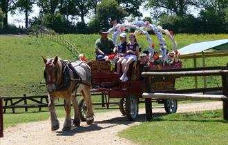 Dorset Heavy Horse Centre Farm Park Rescue Centre Wagon Ride