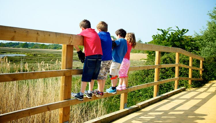 Upton Country Park Children looking at Shoreline
